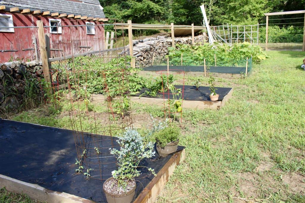 cool weather crops to plant for a great fall garden