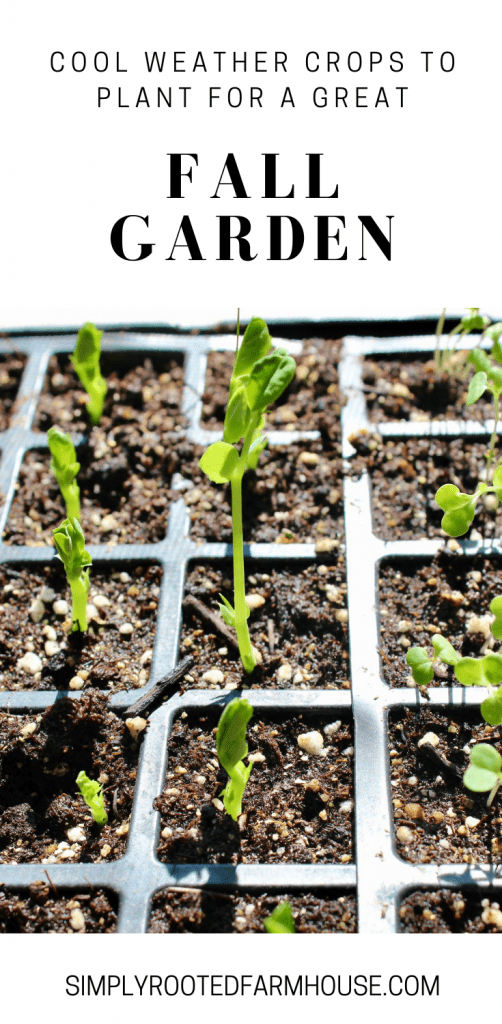 cool weather crop seedlings for fall garden