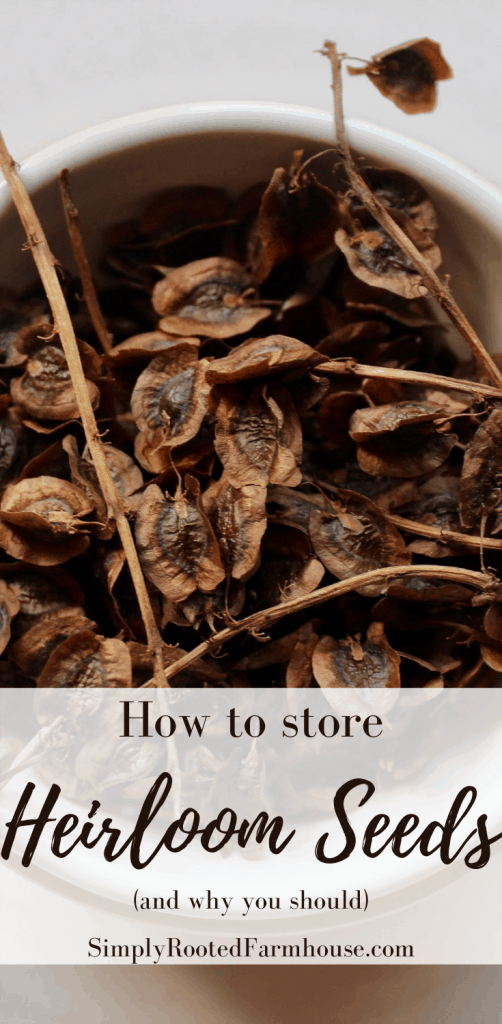 storing heirloom seeds