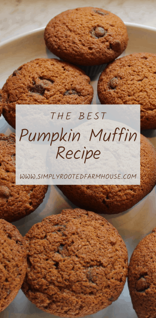 the best pumpkin muffin recipe pinnacle