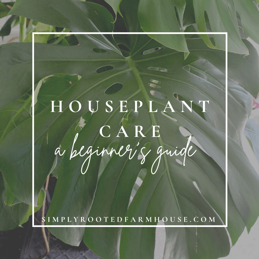 houseplant care beginner's guide