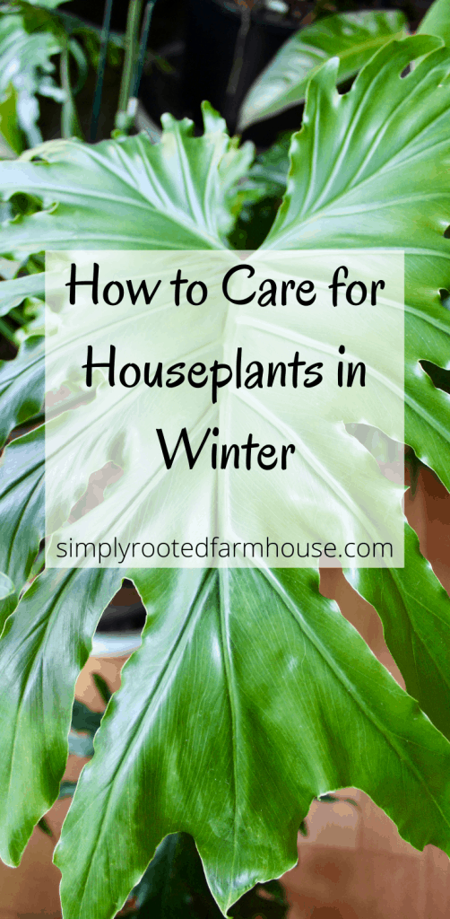 houseplant care during winter