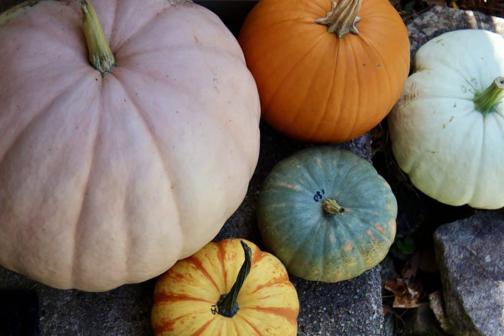 sustainably decorating front steps with pumpkins