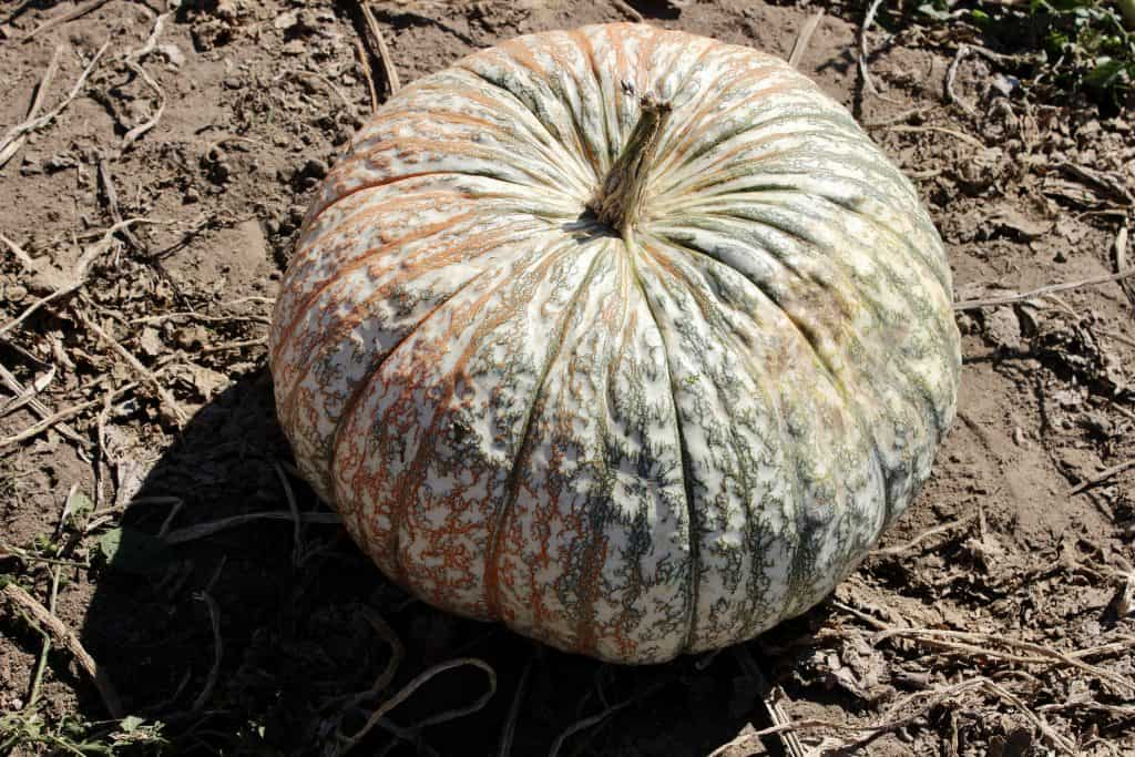 pumpkins for sustainable fall decor