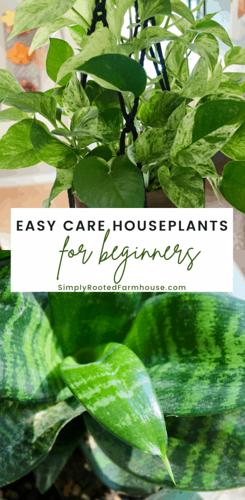 easy care houseplants for beginners
