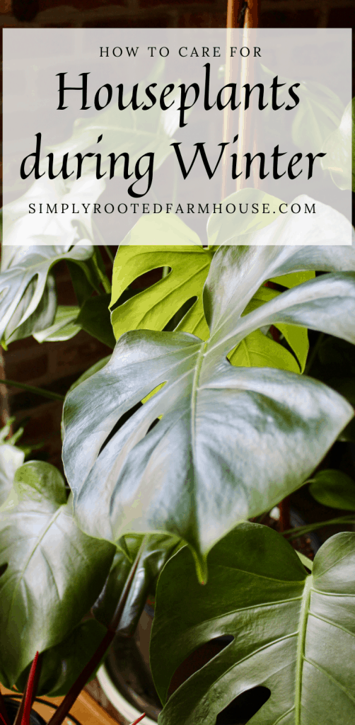 winter houseplant care