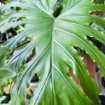 how to properly care for plants in winter