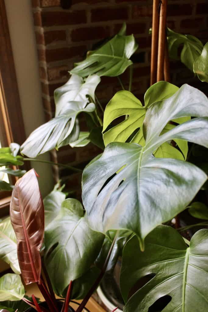 healthy houseplants during winter