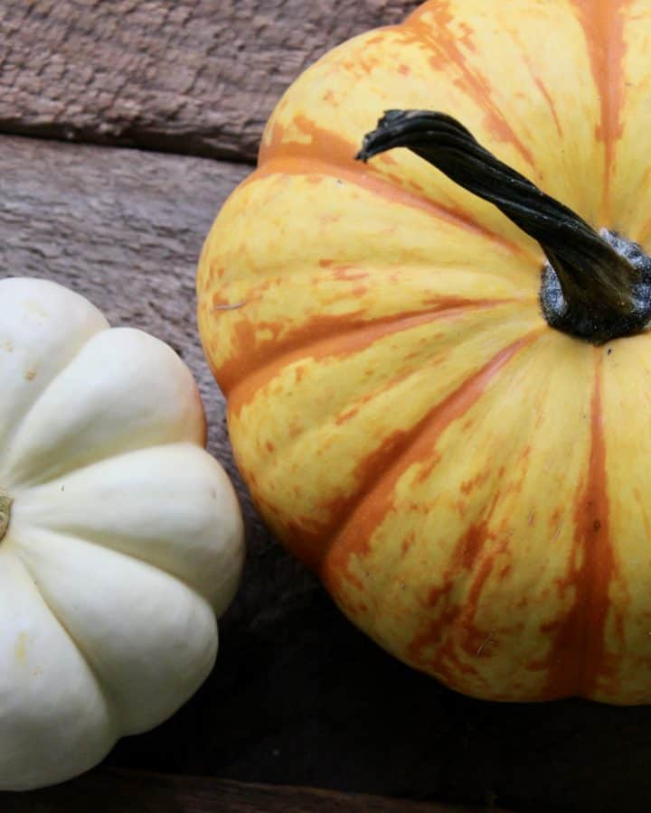 sustainably decorate for fall using beautiful pumpkins