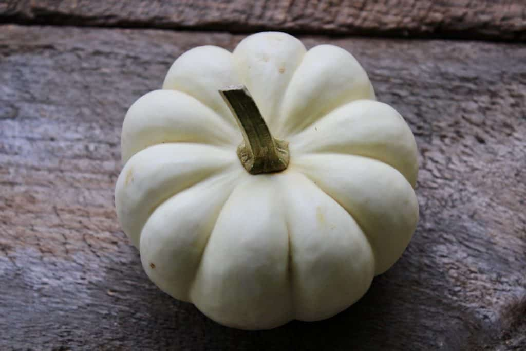 sustainably decorate for fall with pumpkins