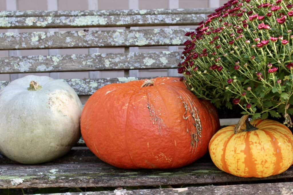 pumpkins and mums on a bench for sustainable decor