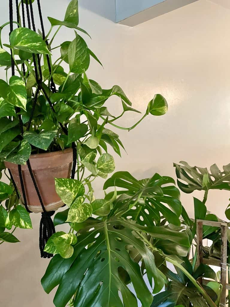 winter houseplant care tips