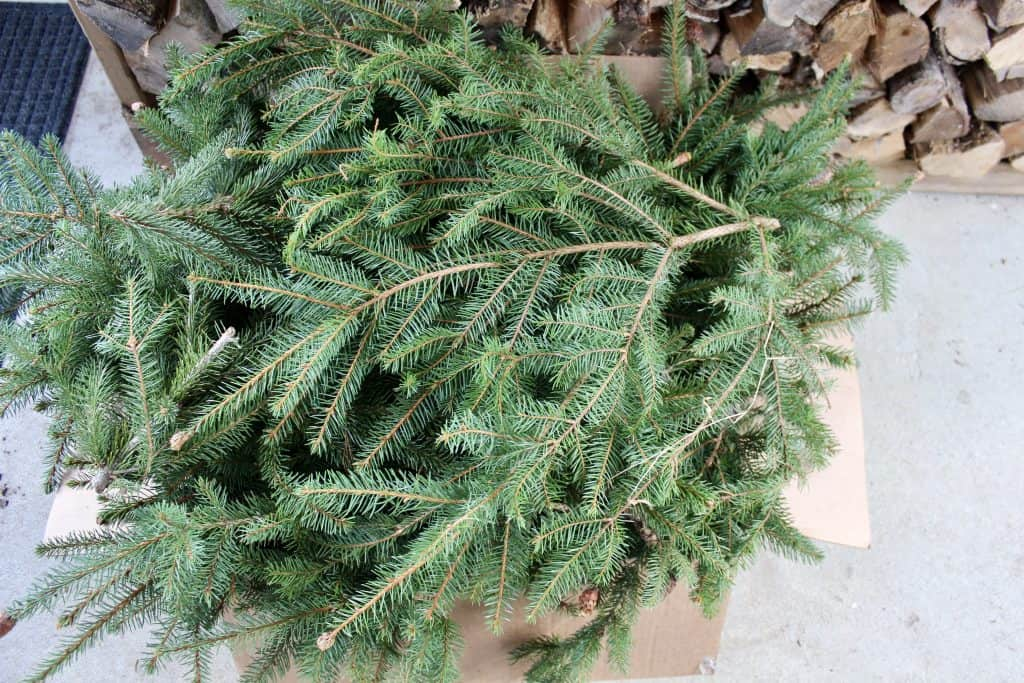 plant clippings to make a wreath