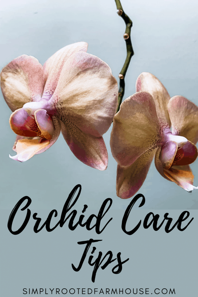 easy orchid care tips and tricks