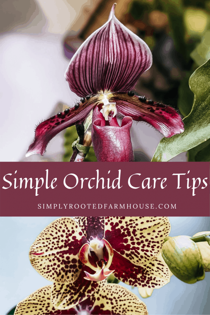 simple orchid care tips