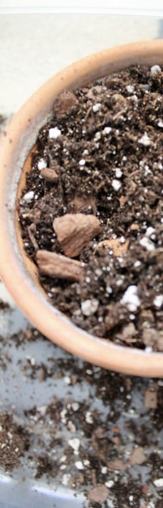 fresh soil for plants propagated in water to be potted in