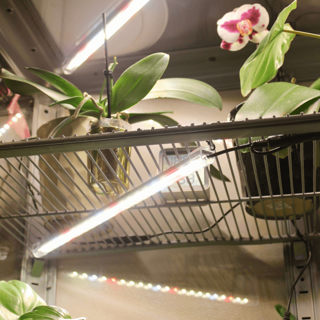 lights and shelves in an ikea glass greenhouse cabinet